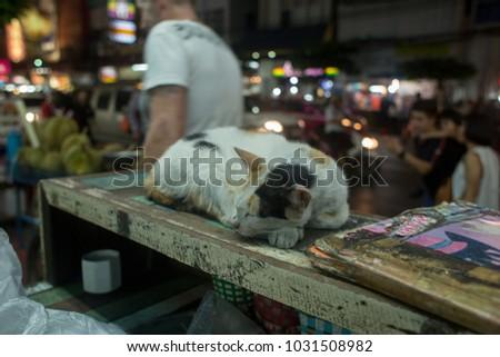 cat bangkok capital of thailand indochina asia travel #1031508982