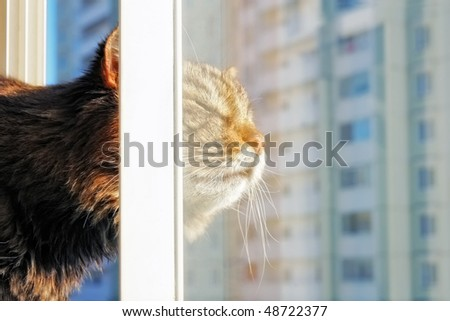 Cat behind a window in a city