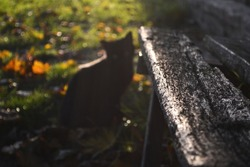 cat bench grass black wood