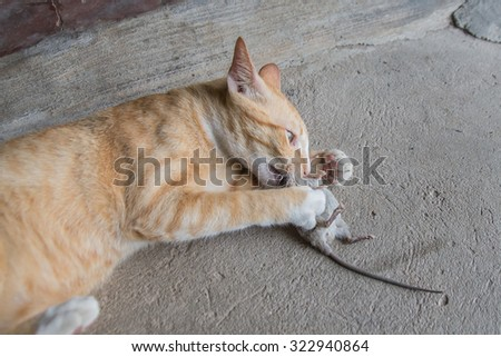 disposable cat litter trays australia