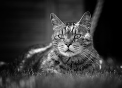Cat Black and Withe cateyes