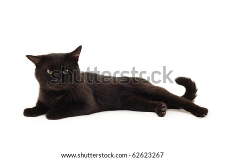 cat black isolated on white background