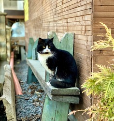 Cat black white little green
