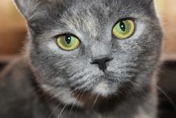 Cat Briton