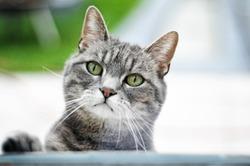 Cat by a window