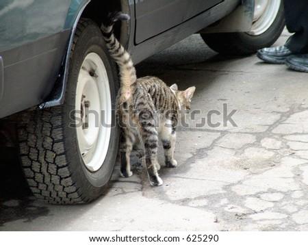 cat car leg