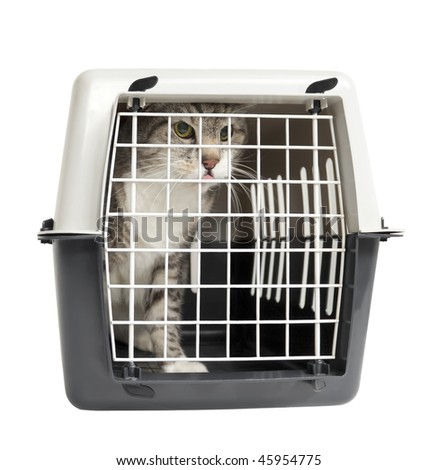 Cat carrier with a cat in it, isolated on white background