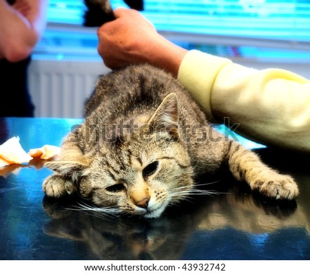 cat castration