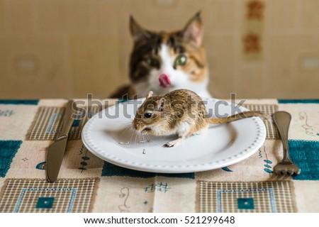 Cat cat licks lips with appetite and looks to little gerbil mouse on the table. Concept of prey, food, pest.