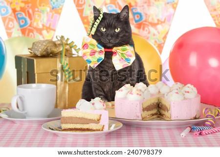 cat celebrating birthday