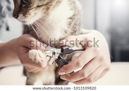 cat claw care, hands scissors claws, doctor shearing close-up