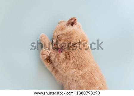 Cat cleaning itself on blue background. Cat care. Close up. Copy space for text #1380798290