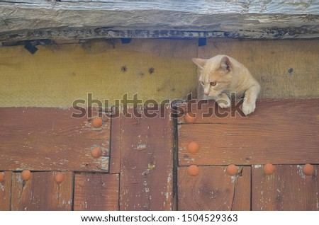 Cat climbed in frame of an old, old door.