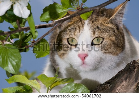 cat climbed on a tree and looks around