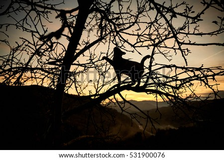 Cat climbed on a tree with a sunset background