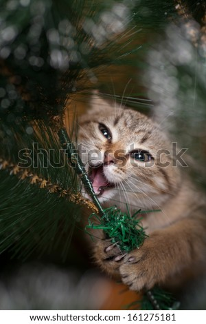Cat Climbing On A New Year Tree