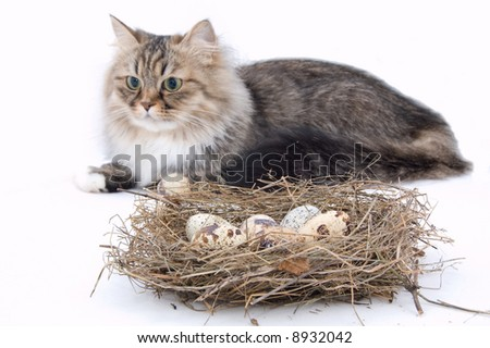 cat close by nest