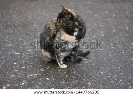 Cat color of wet asphalt on wet asphalt #1449766205