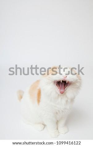 cat cute animal pet #1099416122