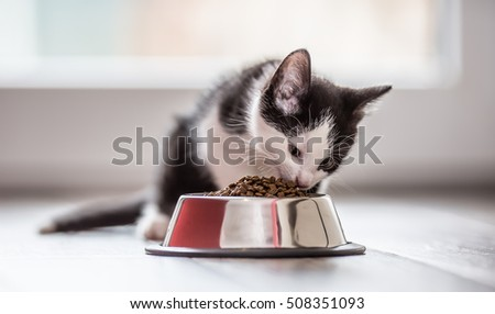 Cat. Cute little kitten with a bowl of granules at home or in the garden. #508351093