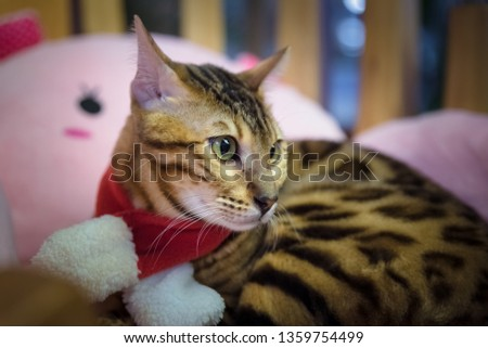 Cat cute pet #1359754499