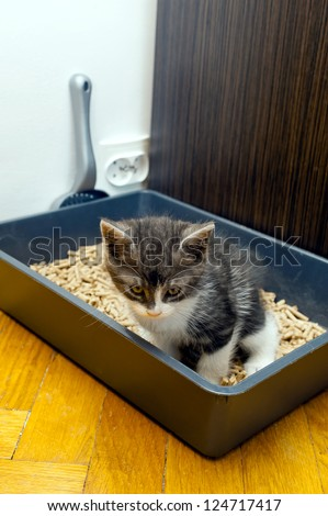 Cat dispose in litter box