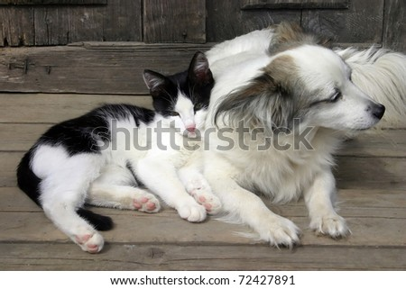 Cat dog friendship - stock photo