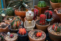 Cat doll carry welcome sign where it surrounding by colorful cactus
