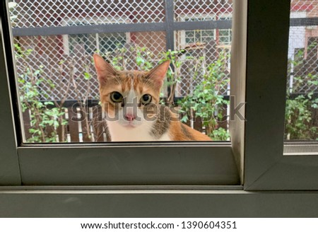 cat, domestic cat outside the house looking   at the window  #1390604351