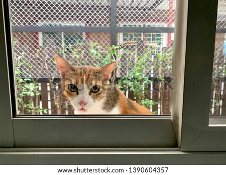 cat, domestic cat outside the house looking   at the window  #1390604357