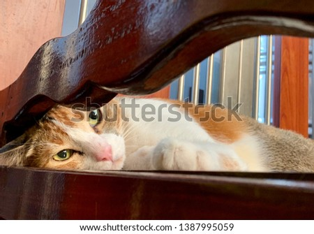Cat, domestic cat relaxing, pet in house concept #1387995059