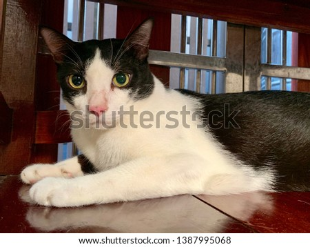 Cat, domestic cat relaxing, pet in house concept #1387995068