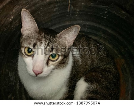 Cat, domestic cat relaxing, pet in house concept #1387995074