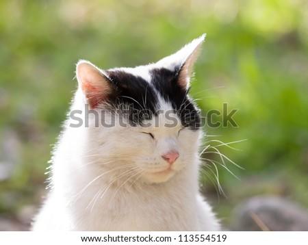 Cat dozing