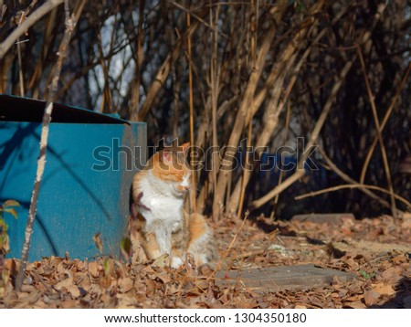 Cat dozing off by the trashcan among the wood