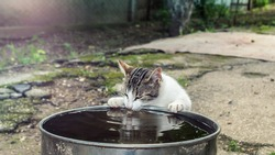 Cat drinking from a bucket on the street on a sunny day reflected in the water. Shallow Selective focus.
