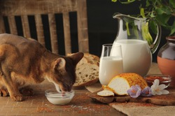 Cat drinking milk on wooden table next to goat cheese with condiments, bread and jug of milk.