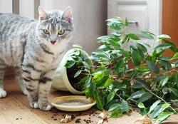 Cat dropped houseplant