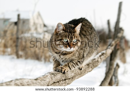 Cat during hunting for birds. Gray cat sitting on a rustic fence.