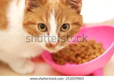 cat eat
