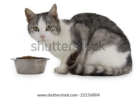 Cat eating, cat with food cup, white background.