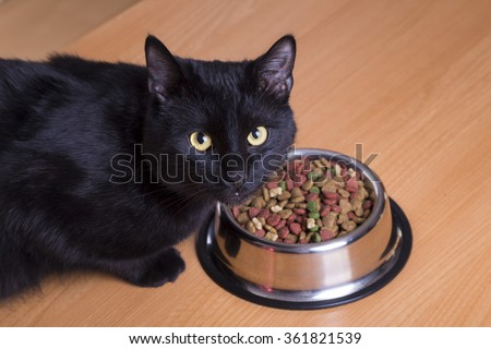 cat eating food in a dish