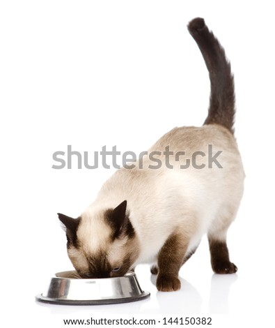 cat eating food. isolated on white background