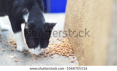 cat eating  kibble on the floor