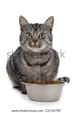 Cat eats from a bowl. Isolated on white background.