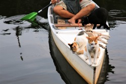 Cat enjoys on the white boat in canal,The cat fishing on the inflatable boat on the river.funny cat