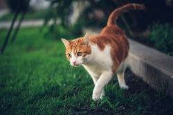 Cat Exploring the Yard