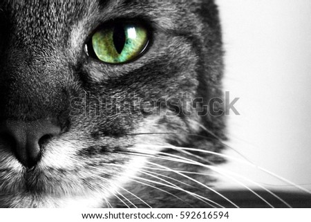 Cat eye #592616594