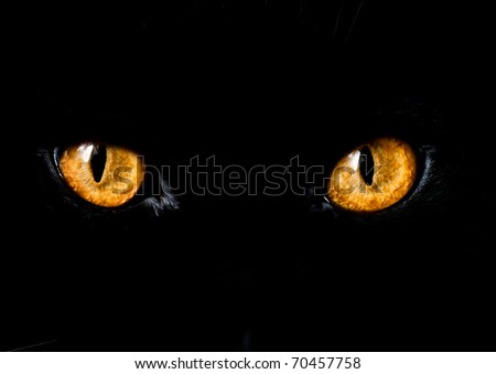 Stock Photo Cat Eye