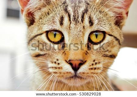 Cat eyes #530829028
